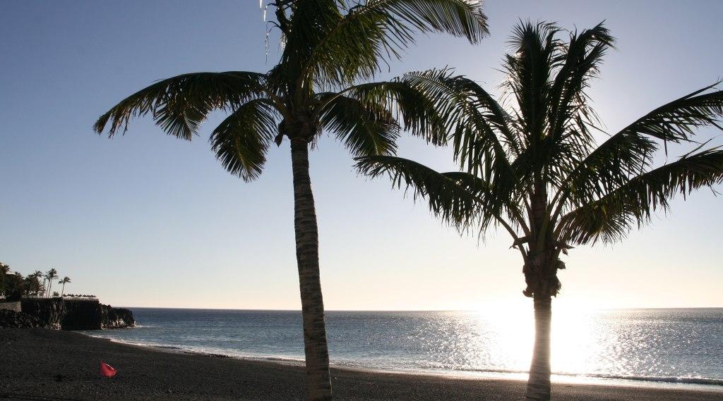 La Palma Detox La palma